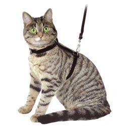 Ensemble laisse-harnais pour chat