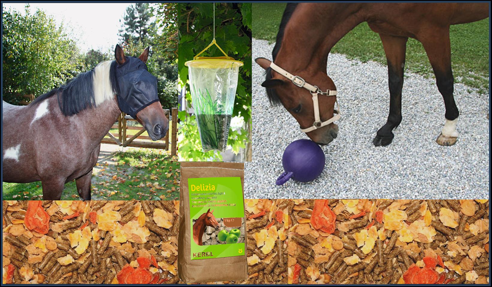 Alimentation et bien-être du cheval